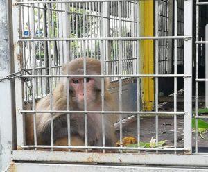 Prisonnier au cirque MULLER