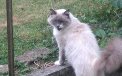 A ADOPTER   BIANCA identifiée et stérilisée par le CEPPAF. Sauvée de la rue. Cohabite sans problème avec chiens et chats. Contacter le 0688034340