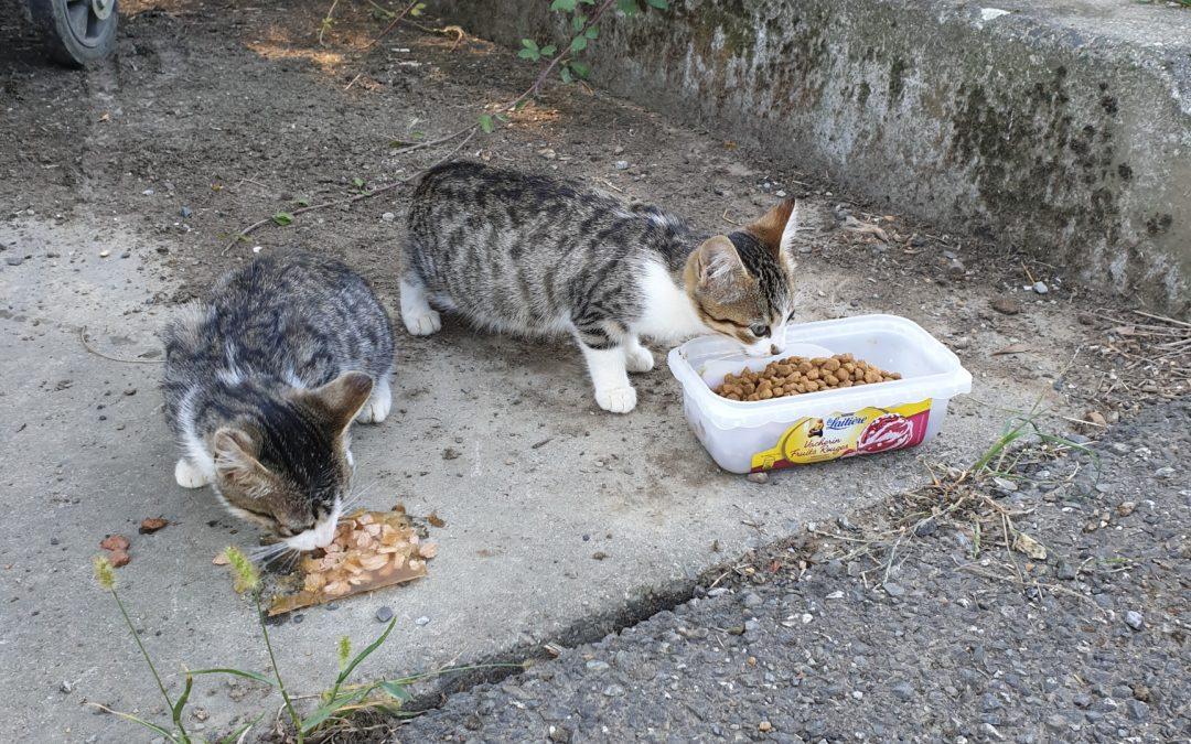 2 jeunes chats à réserver