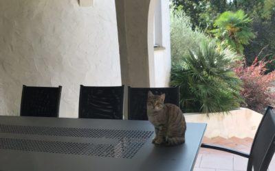 A adopter Zoé ou Zébulon