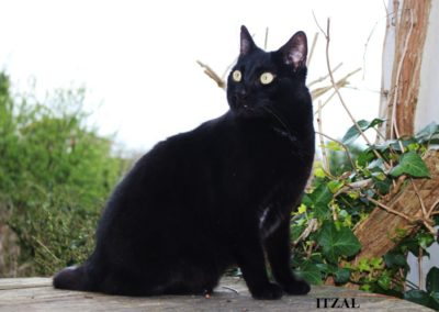 Itzal-1-1-1024x683