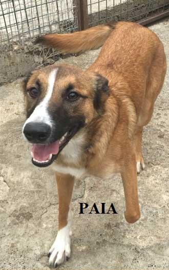 PAIA-1
