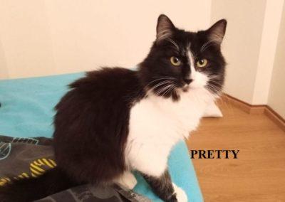 Pretty (7)