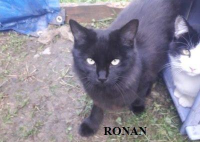 RONAN-1-400x400