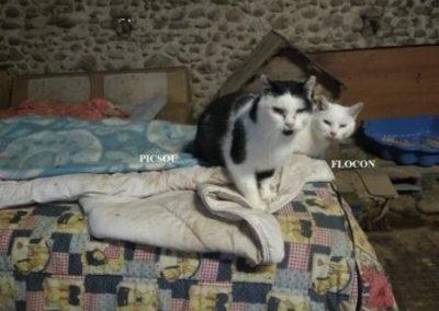 TITUS-ET-FLOCON-2-1024x768