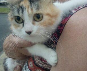 La jolie Cannelle environ 4 ans à l'adoption